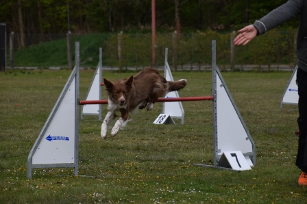 Zughundetraining Agilitytraining